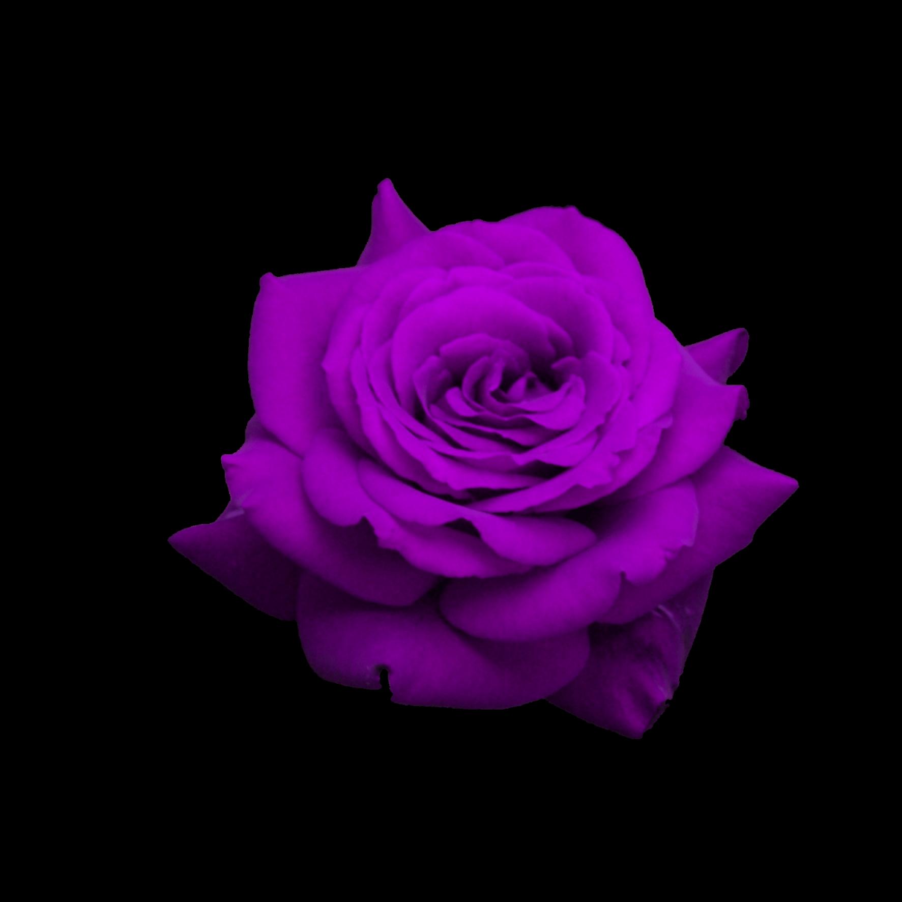 Purple Flower Rose Ftestickers Sticker By Irina💗
