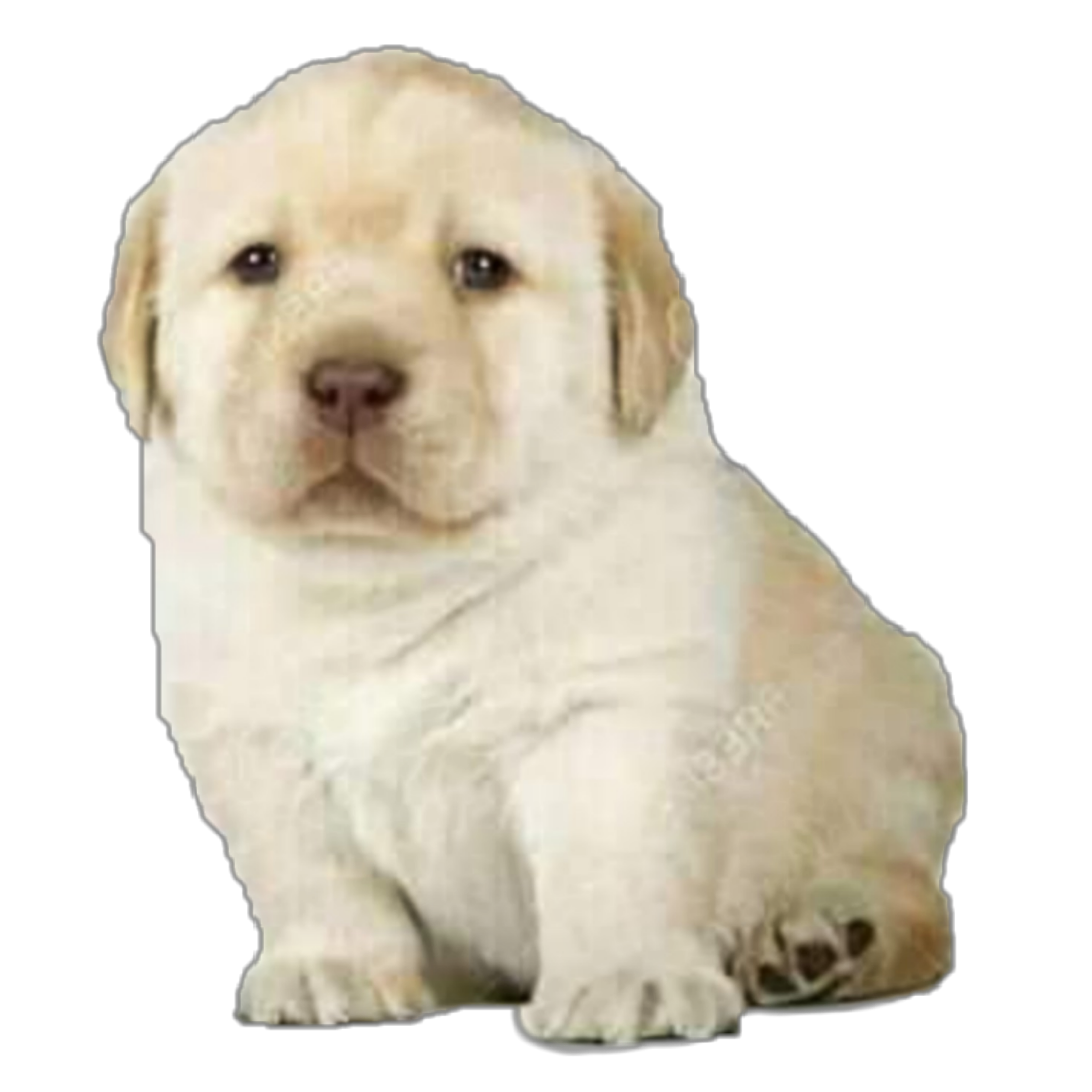 perro cachorro meme moda - Sticker by Eliza Nuñez