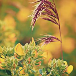 nature plantsandflowers simplenature flowers plants yellowflowers wildflowers wildplants groundplants seasonsarechanging focusontheforeground depthoffield bokeh naturecolorsarealwaysperfect lowangleshot naturephotography freetoedit