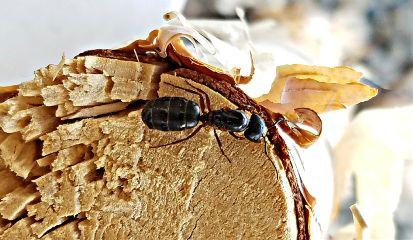 freetoedit bugs ant wood art