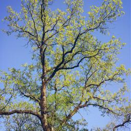 nature forest tree photography myshot