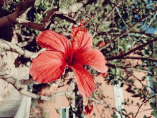 photography flower