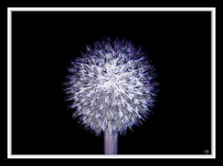 edited photography flower pencilart neon freetoedit