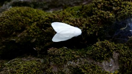 freetoedit photography nature butterfly white