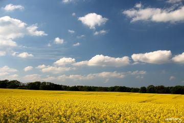 photography myphoto field bluesky landscape