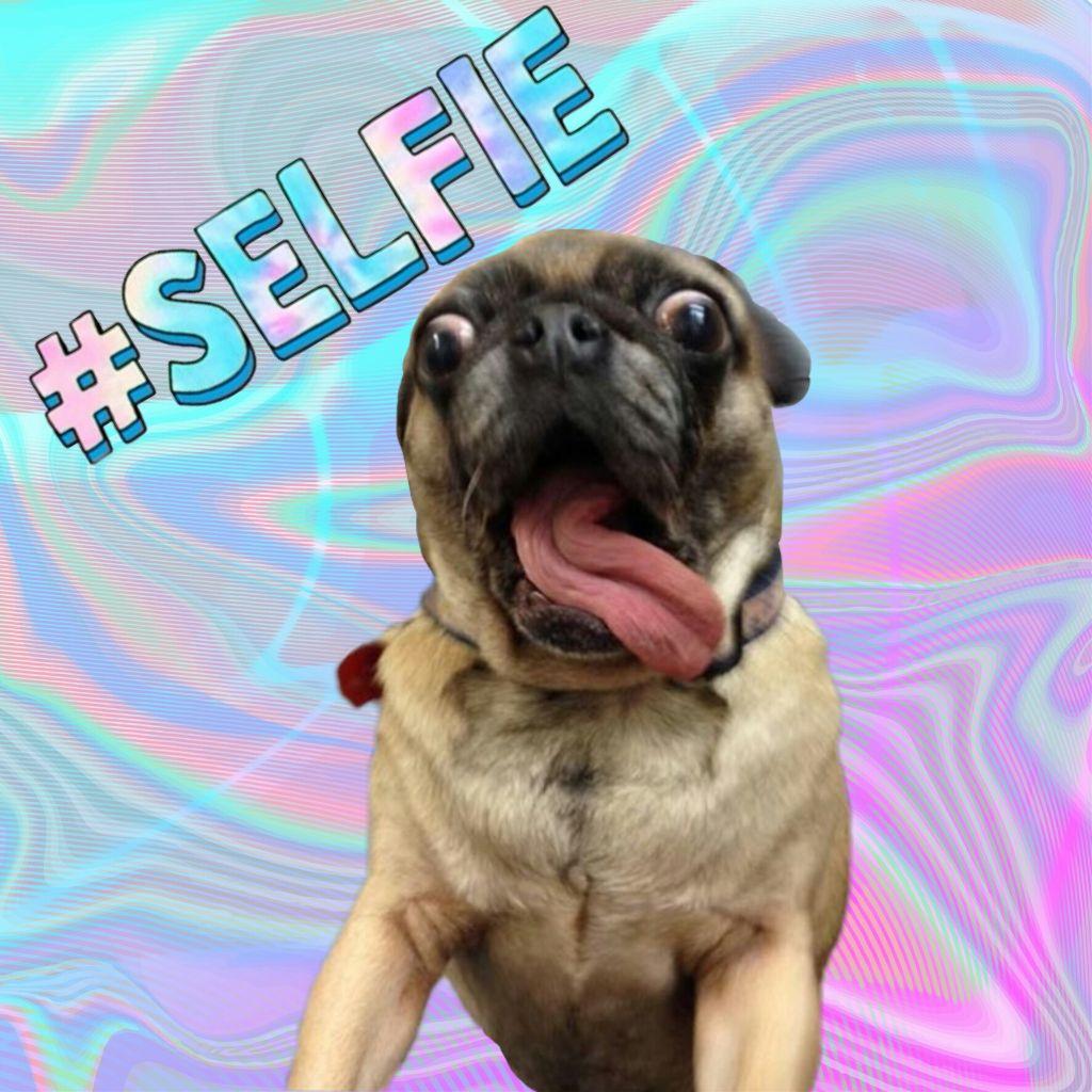 #freetoedit  #selfiestickerremix other original sticker belongs to @twinkle_dog228