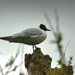 gull sea nature bird birds