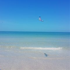 beach birdreflection bluesky photography gulfflorida