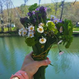 freetoedit fresh flowers