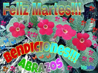 feliz bendiciones byliriosbellos fromcostarica purelife