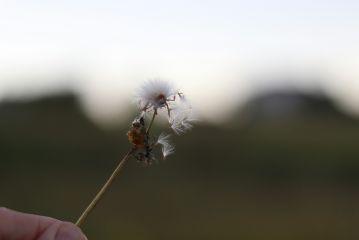 freetoedit nature bokeh flower