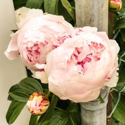 upcloseandpersonal flowerhead petalsandblooms colorful portraitsofcolor