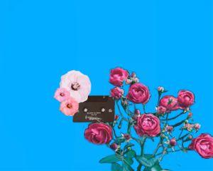 flowers cassette rose freetoedit
