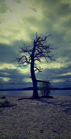 freetoedit nature tree