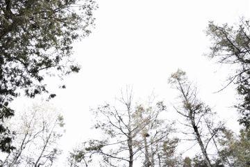 freetoedit trees sky nature minimal