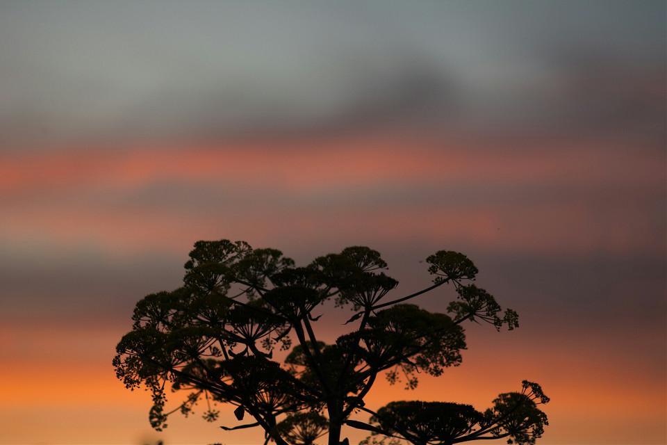 #photography #nature #sunset
