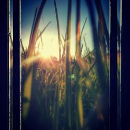 grass inspiration grassland grassfield nature freetoedit