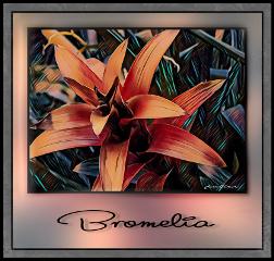 pameeting7 biosphärepotsdam flower art magiceffects