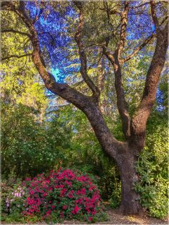maxfieldparrishlike oak flowers nature beauty