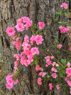 flowers blooming blossoms bark