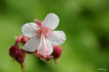 photography myphoto flower garden drops