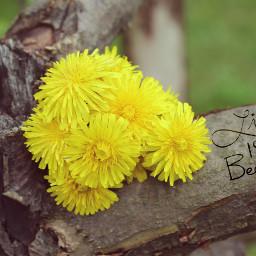 myphoto dandelions vintageeffect floralquotes erasetool freetoedit
