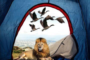 freetoedit myedit madewithpicsart animals tent