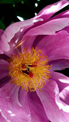 flower blossom garden closeup