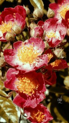 @csefi flower garden mygarden nature