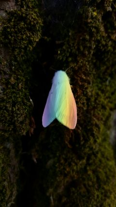 freetoedit rainbowlightcontest butterfly nature