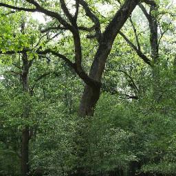 nature tree green freetoedit