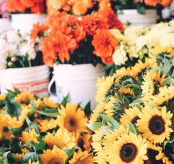 flowers plants sunflowers bloom