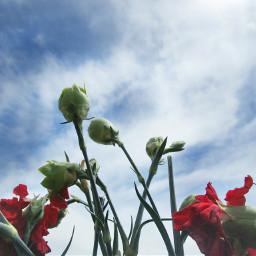 freetoedit photography sky clouds carnation