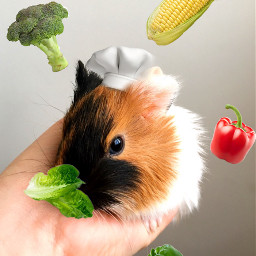 freetoedit chef vegetables chefhat animal