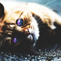 galaxyeyes galaxyeye galaxy cat catlover freetoedit