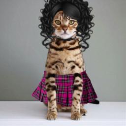 freetoedit prettygirl catlover catwoman pets&animals
