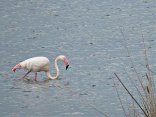 photography nature lake flamingo bird freetoedit