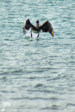 bird sea nature photography