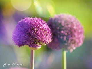 malzfabrik flower nature colorful lightmask