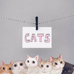 freetoedit cats cute selfiecats catstickers