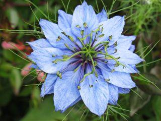photography flower nature emotions blue freetoedit