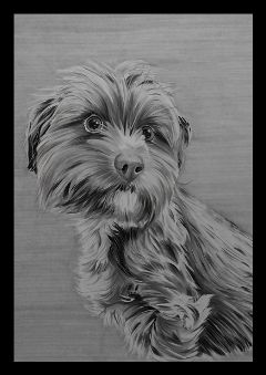 california art pencilart sketch pets