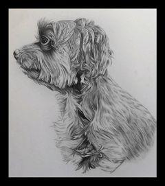 california pets pencilart sketch