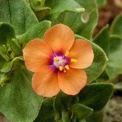 littleflower flower galaxy zoom freetoedit