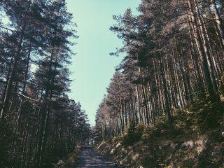 landscape treeline nature vsco vscocam