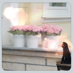 freetoedit flower remixed