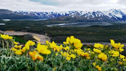 freetoedit alaska flowers mountain park