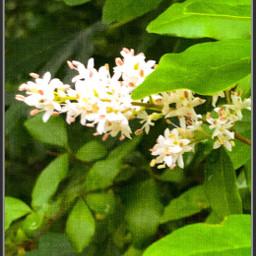 petalsandblooms leaves fragile tranquility serene