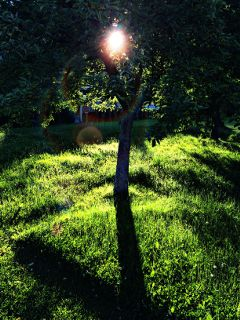 green nature tree sun