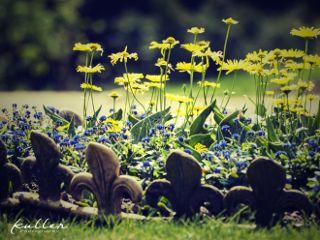 flowers garden babelsberg